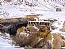 Puente del Inca, nevado en Potrerillos