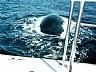 Ballena por debajo de la embarcación en Puerto Madryn