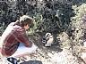 Reserva de Pinguinos en Punta Tombo